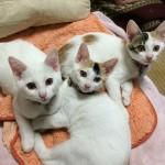 """[第400回]ジチョー家の拾いネコ3匹が""""満1歳""""に!!"""